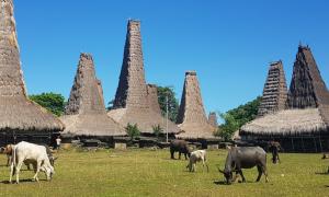 Kampung Tradisional Ratenggaro - Tour Sumba